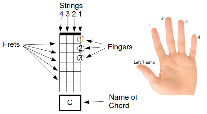Chord Diagram explained...